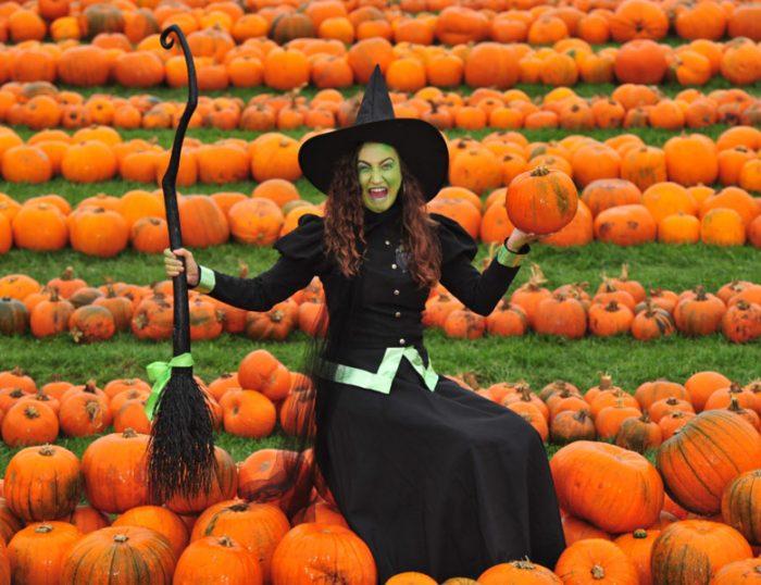 Stockeld Park Halloween