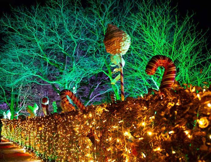 Edinburgh Zoo Christmas Trail